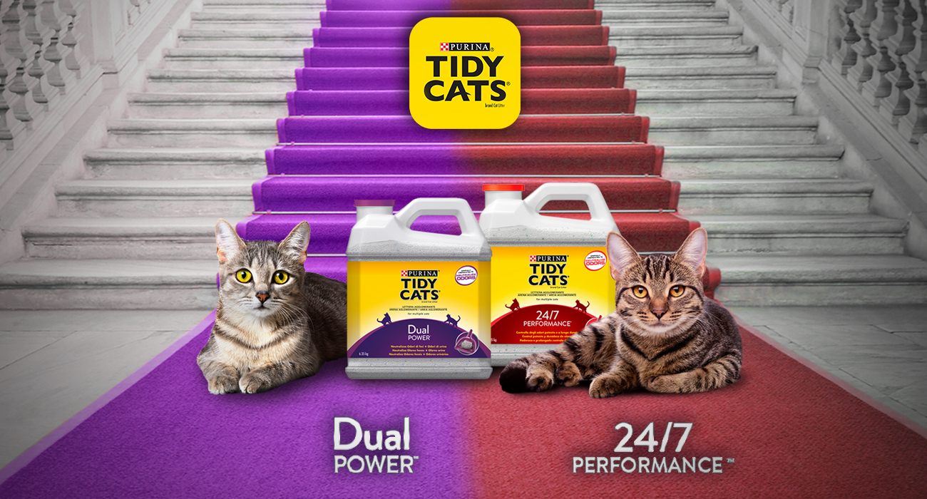 Immagine_3_Tidy-cats